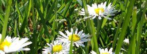 Foto Frühlingsblumen